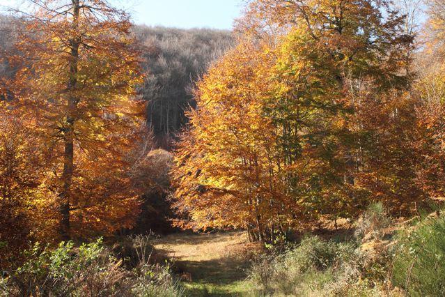 Hêtraie de Zilbeti en automne